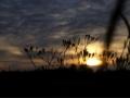 Sonnenuntergang_1507003