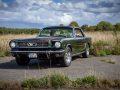 Mustang_auf_der_Weide