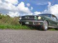 Mustang_auf_der_Wiese